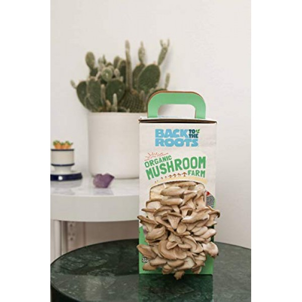Back to the Roots Organic Mushroom Growing Kit, Harvest Gourmet ...