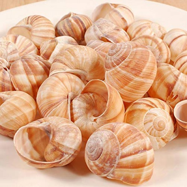 Cavair Line Escargot Snails Empty Giant Shells - 24 pcs - Extra ...