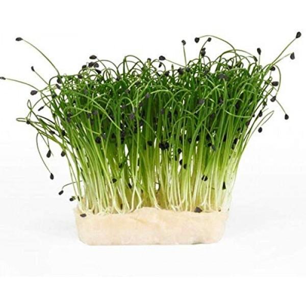 2 oz Garlic Chive Seeds, Non-GMO, Pure Microgreen Seeds, Delicio...