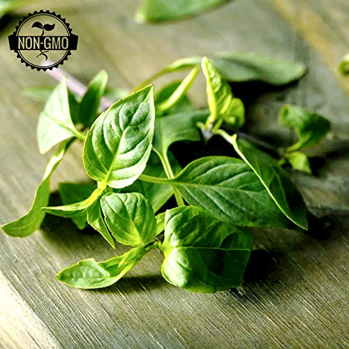 Gaeas Blessing Seeds - Organic Basil Collection 6 Individual N...