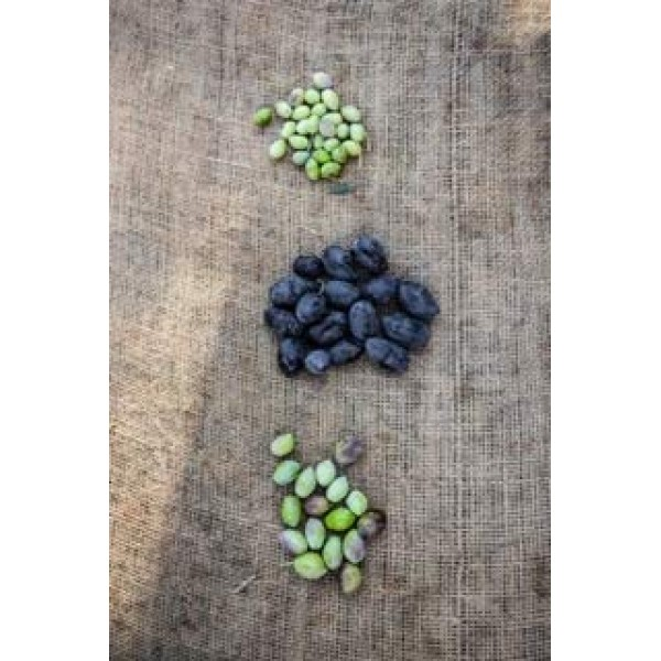 Black Kalamata Large Pitted Olives - 4.4lbs - NON GMO - Gluten F...