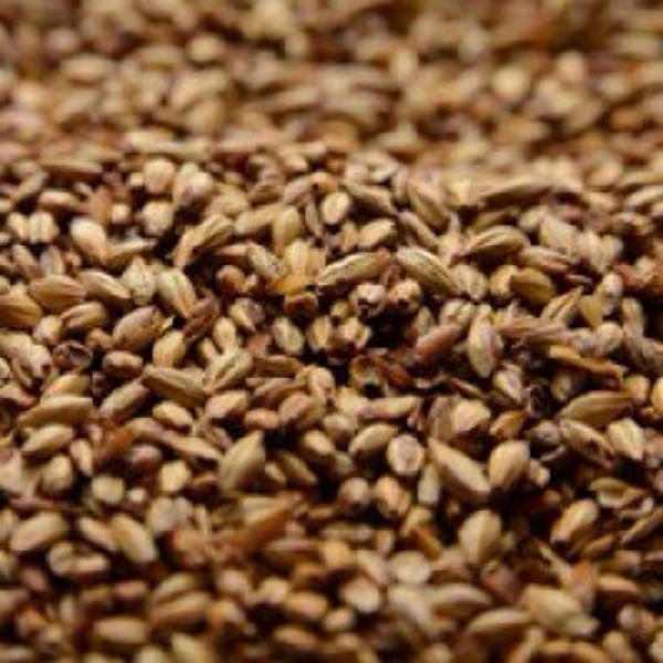 Briess 2-Row Caramel 40L Uncrushed Malt - 5 lb. Bag