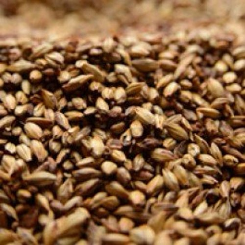 Briess 2-Row Caramel 60L Uncrushed Malt - 10 lb. Bag
