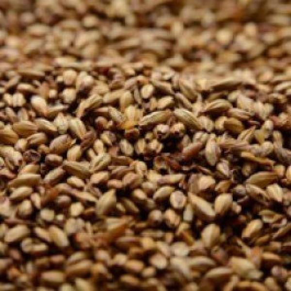 Briess 2-Row Caramel 40L Crushed Malt - 1 lb. Bag by Strange Brew