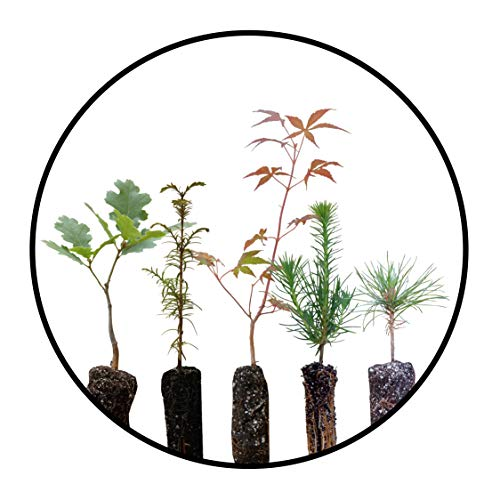 Bonsai Tree Bundle | Collection of 5 Live Tree Seedlings | The J...