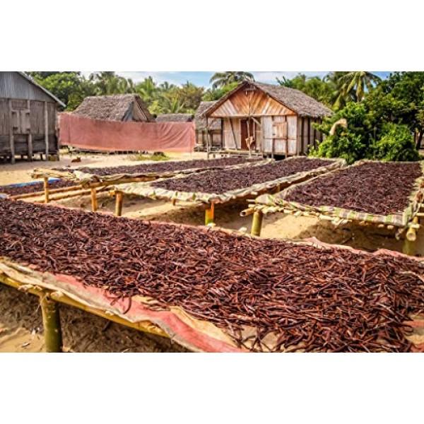 1/4 LB Madagascar Vanilla Beans. Whole Grade A Vanilla Pods for ...