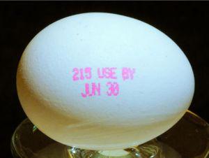 egg_0