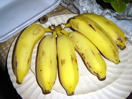 A_bunch_of_bananas